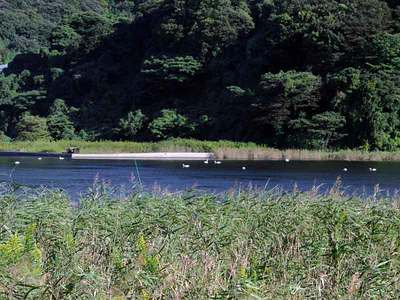 10月9日の東郷池